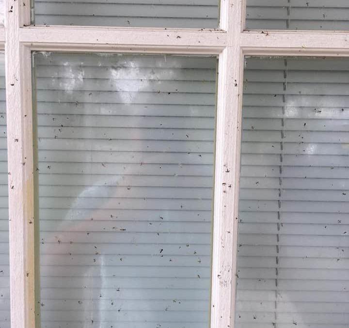 BigShot Mosquito Pro